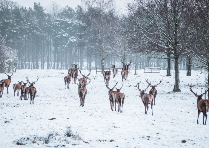 Tatton's Parkland remains open for local outdoor exercise